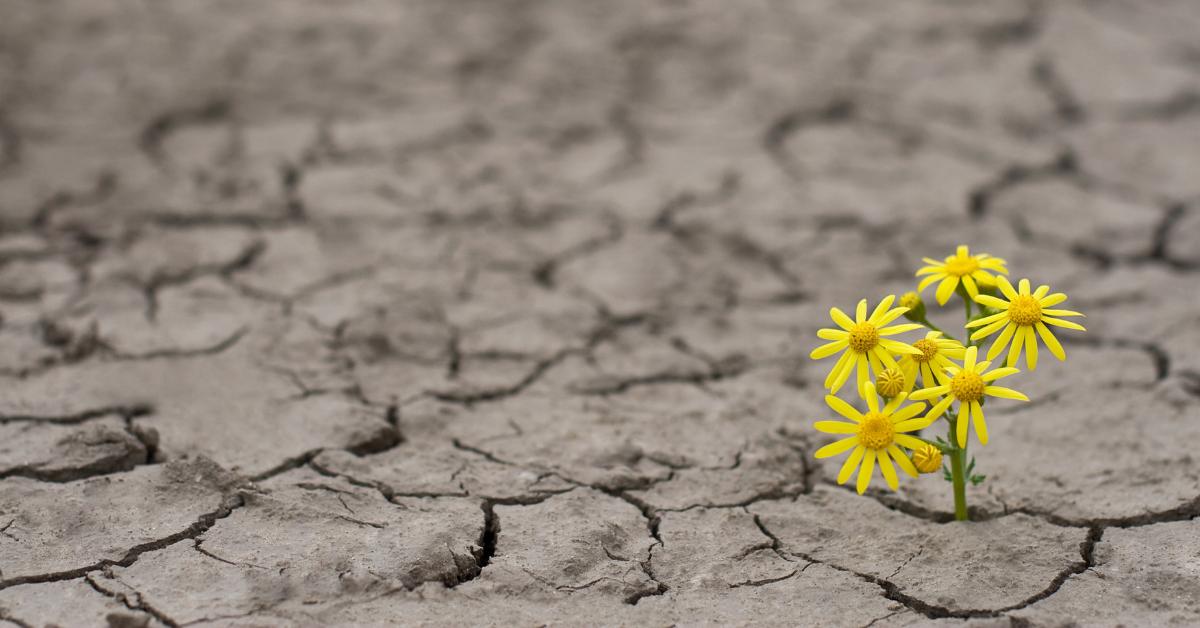 Yellow desert daisy growing from a crack in a stark desert landscape