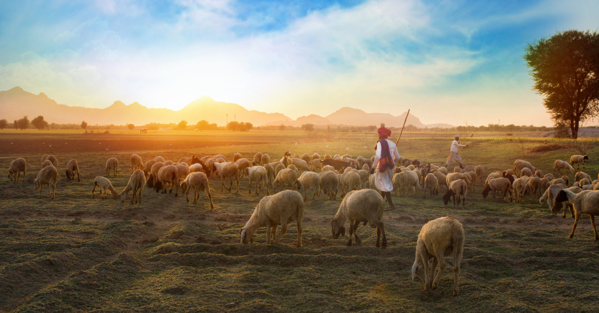 Serving on the Way to Something Else – Becoming a Noble Shepherd