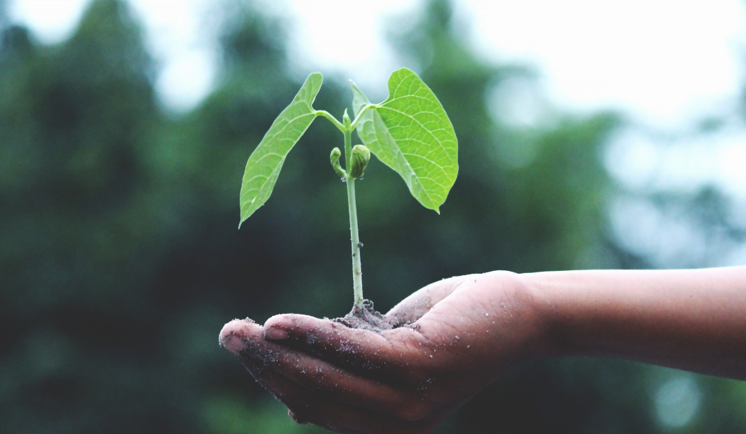 You Are Planted – Now What?